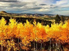 Boulder, Colorado. Will move back.
