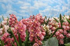 Meet an easy-care orchid that thrives outdoors in mild regions.