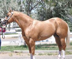 Most Beautiful Horses, All The Pretty Horses, American Quarter Horse, Quarter Horses, Beautiful Creatures, Animals Beautiful, Animals And Pets, Cute Animals, Cute Horses