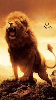 ANIMATED LION                                                                                                                                                                                 Más