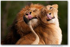 Funny Wildlife — Smile :D by Nikographer [Jon] on Flickr.