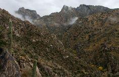 Montrose Canyon from Romero Trail, Pusch Ridge Wilderness, AZ