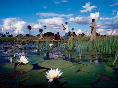 The Okavango Delta is best seen by Mokoro