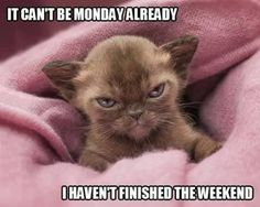 It can't be Monday already I haven't finished the weekend.