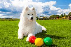 Existen numerosos juegos de inteligencia para perros que tienen como objetivo que el animal ejercite su cerebro y logre resolver distintos desafíos.