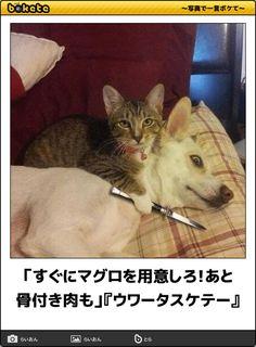 """私が化粧落とすたび、この顔。じわじわくる""""猫のボケて画像""""12選 - Spotlight (スポットライト)"""