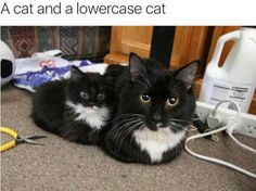 A cat and a lowercase cat