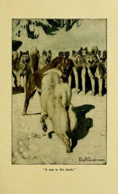 """""""It was to the death."""" The Call of the Wild, 1903 edition. To Build A Fire, John Thornton, Call Of The Wild, Most Popular Books, Short Stories, Moose Art, Illustration, Death, Painting"""