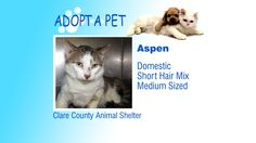 Adopt A Pet: Aspen, Toodeloo, Juno - Northern Michigan's News Leader