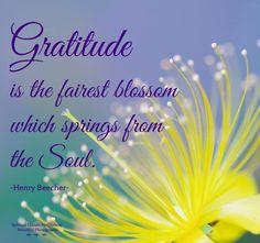 lòng biết ơn là sự hứa hẹn đẹp nhất với độg cơ từ tâm hồn