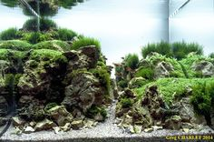 Happinness for my wife by Greg #aquascaping #aquarium