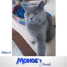 Trilly #Mongesfriends