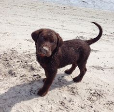 Puppy on a beach.. how could life get any better omg
