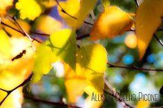 Blurred #endofday#dusk#leaves#autumn#fontcandy@easytigerapps #photoartist#natureartist#naturephotography#nature🍃#light#mood #follow#paceofnature#allisoncoelhopicone#stillnessspeaks#potterhill #massachusetts