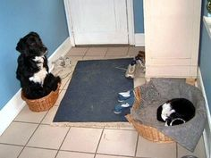That damn cat thinks she can just leave me here out in the small bed, just because I came in later, DOESN'T MEAN I can't have the big bed, I mean, I kinda fit in this bed sitting up—WHAT AM I SAYING? I can't SLEEP LIKE THIS! If I wake up the cat, it'll be mad again, oh dammit!