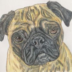 Watercolor and pen & ink pug painting by Harvest Moon Farm on Etsy. Custom pet portraits available