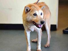 SUPER URGENT 12/27/14  Brooklyn Center    JADA aka JAY - A1024129    FEMALE, BROWN, JINDO MIX, 15 yrs  STRAY - STRAY WAIT, NO HOLD Reason STRAY   Intake condition EXAM REQ Intake Date 12/27/2014, From NY 11226, DueOut Date 12/30/2014,