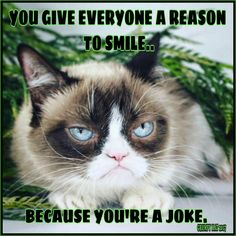 2291 The Best Of Grumpy Cat Images In 2019 Grumpy Cat