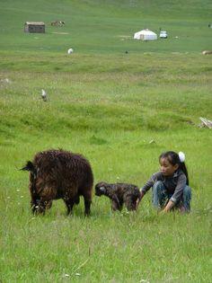 Summertime in Mongolia.