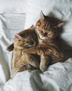 Ten cuidado, porque en cuanto veas a estos dos gatos, tu corazón sera robado por ellos en ese mismo instante... no se puede evitar!. Los gatos, tiene...
