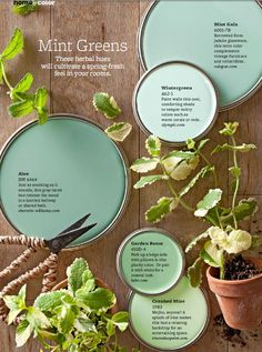 "Mint Green Paint Colors - On-trend, but completely livable, take a cue from these mint green paint colors to soothe any room. ""Mint greens are happy colors that work in a lot of different climates,"" designer Paige Sumblin Schnell says, as long as the room Mint Green Paints, Green Paint Colors, Wall Colors, House Colors, Vintage Paint Colors, Soothing Paint Colors, Nursery Paint Colors, Color Verde Aqua, Paint Shades"