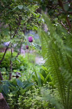 solrum trädgård- att ta hand om en gammal trädgård