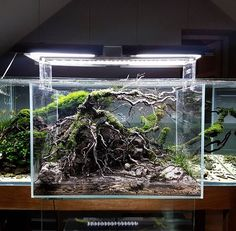 ADA Cube Garden 45-L Clear cabinet/Aquasky 451/Super Jet ES-300 #adaideastudiopoland #adapoland #handmade #decoration #design #art #water#wood #aquascape #layout #glass #secret #lovetonature#wild #animals #frodostone