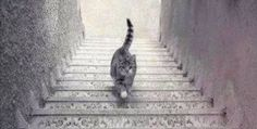 The Internet has a new controversy: is this cat going up or down these stairs? The optical illusion will mess with your head.