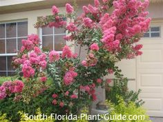 Florida Tree Guide - I need to crack down on deciding what trees would be best to plant for our yard