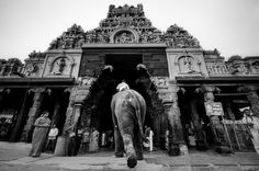 Find out who made the cut in the Tamron Challenge! Jain Temple, Lord Murugan, God Of War, Ganesha, Deities, Amazing Photography, Big Ben, Pop Culture, Challenges