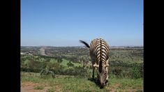 africa Fort Klapperkop Nature Reserve surrounds Fort Klapperkop that is situated on one of the hills in the park by Pretoria, . Mtb Trails, Mountain Bike Trails, Pretoria, Nature Reserve, Africa Travel, Guide Book, Travel Guide, South Africa, Park