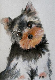 Yorkie drawings yorkshire terrier drawing by slippy88 - Dessiner un yorkshire ...