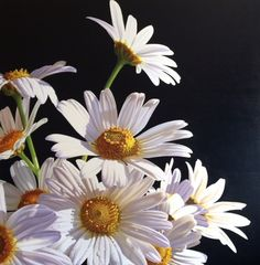Amber Emm Artworks Available At Black Door Gallery. Photo realistic floral oil paintings with strong contrasting light, depicting the beauty that can be found in our own backyard. Black Doors, Amber, Backyard, Gallery, Floral, Artwork, Plants, Painting, Beauty