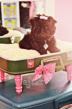 """This is the SAME exact suitcase I have of my great-grandmother's! As much as she loved her little dog, I know that she wouldn't mind me using one of her belongings for my new """"baby""""!"""