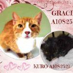 GRACIE – A1082526 AND KURO  – A1082527