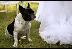 rocco (in a wedding set) by destino2003 (diegofornero.it), via Flickr