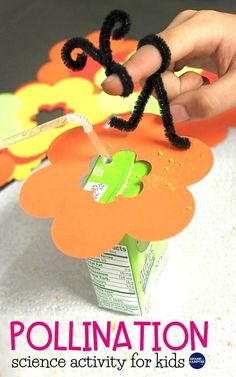 Fun pollination science activity using macaroni Bee Activities, Science Activities For Kids, Preschool Science, Science Experiments Kids, Science Lessons, Science Projects, Elementary Science, Sequencing Activities, Science Fun