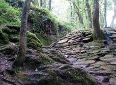 Le Val sans retour Forêt de Brocéliande