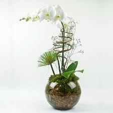 vasos com orquideas - Pesquisa Google