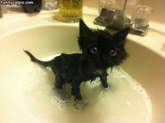 Tiny Bath Time for Courtny who is now a cat.