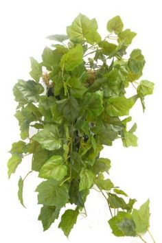 ArArtificial Grape Ivy bush. Suitable for indoor and outdoor use.Perfect artificial trailing plant to create your very own maintenance free vertical garden or to look like a grape vine growing up trellis work