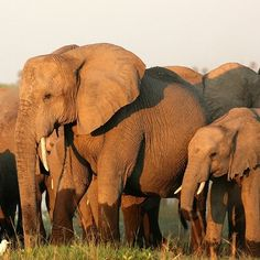 A Day on Safari at andBeyond Ngala Tented Camp in Kruger National Park RePinned by : www.powercouplelife.com