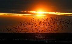 Una bandada de aves marinas vuela sobre la costa al amanecer cerca de Whitley Bay, North Tyneside (Owen Humphreys, 2014)
