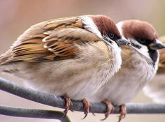 The amazing world of the animals in pictures!: sparrow