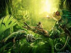 Resultado de imagen para jungle wallpaper
