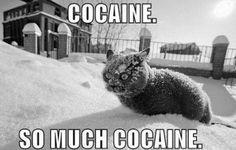 kitty blow