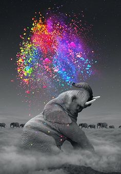 cloud elephant Cigarettes Animal DIY Digital Painting By Number Modern Wall Art Canvas Painting Unique Gift Room Decor – Garden & Home Image Elephant, Elephant Love, Elephant Art, Colorful Elephant, Images Of Elephant, Baby Elephant Pictures, Elephant Sketch, Happy Elephant, Elephant Trunk