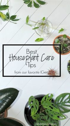 Best Houseplant Care Tips from my favorite Instagramers on Clever Bloom #plantcare #indoorplants #houseplants #plantlady