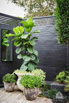 black garden walls with green plants Garden Care, Black Garden, Walled Garden, Contemporary Garden, Small Garden Design, Green Plants, Garden Pots, Garden Walls, Potted Garden