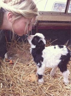 Adorable newborn goat. They are the sweetest animals ever; I know because I grew up with them.  They are sweet even to the end of their full life (12-13 year).